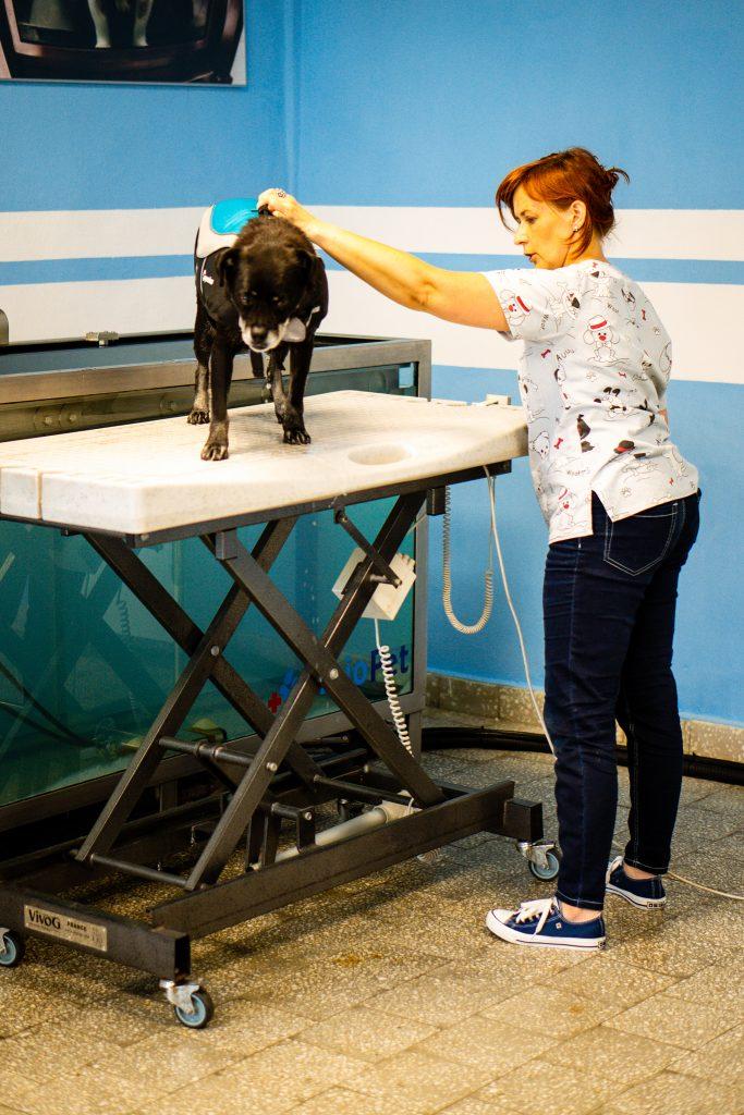 Bieżnia wodna dla psa - Gabinet rehabilitacji psów i kotów ZooFizjo Śląsk | Dąbrowa Górnicza